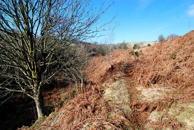 Path above Cwm Moch