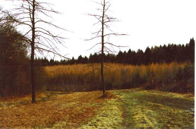 Fence Wood near Bucklebury Alley