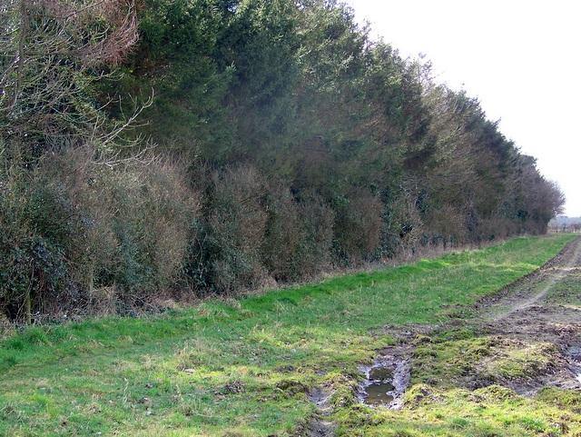 Footpath near Ripley