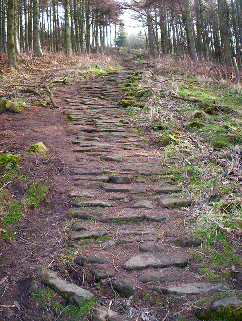 Pathway to Live Moor