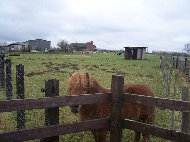 Friendly pony in Spion Kop Farm