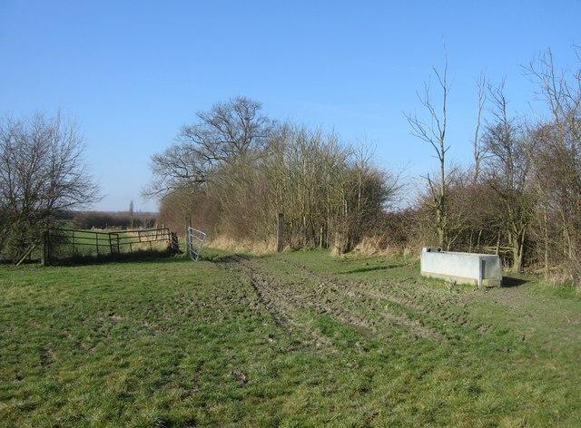 Typical farmland scene
