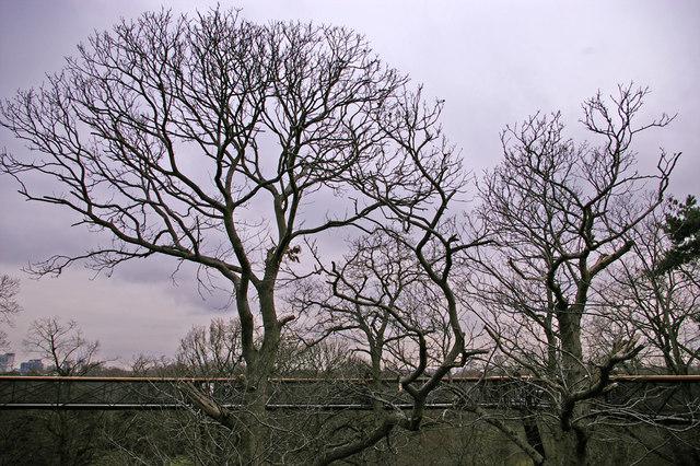 The Xstrata Treetop Walkway and Rhizotron, Kew Gardens, Surrey