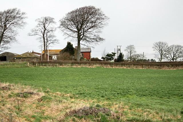 Cogie Hill Farm