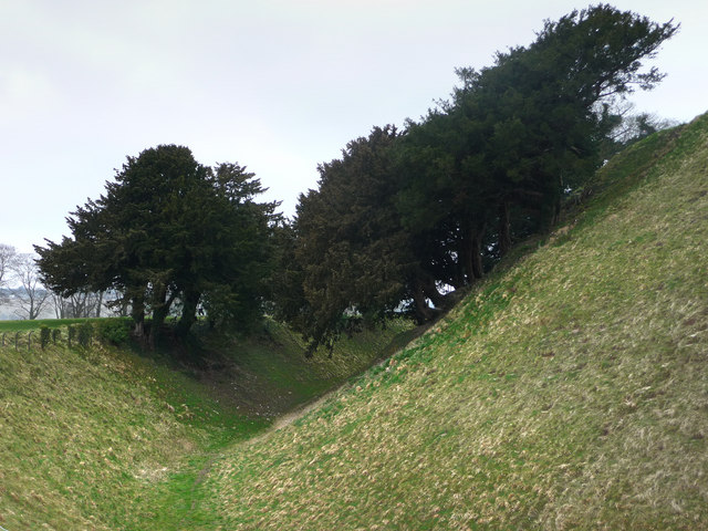 Yew trees on Old Sarum central mound