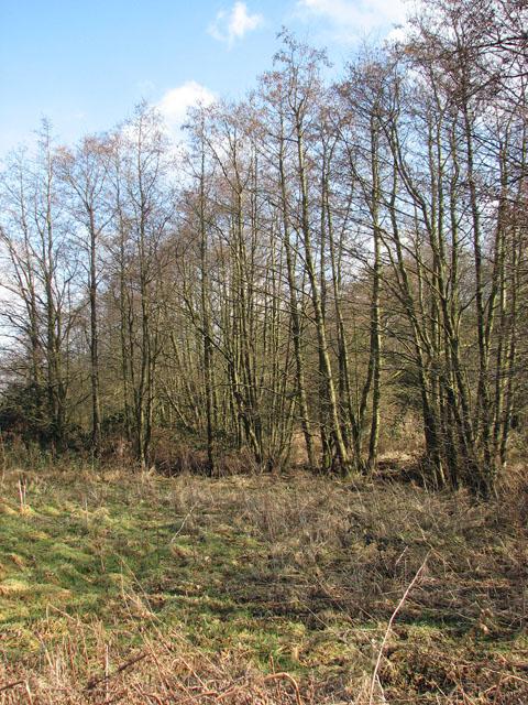 Trees growing alongside a drain
