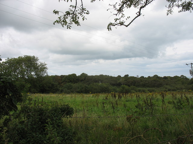 A well wooded area above the incised Afon Marchogion valley