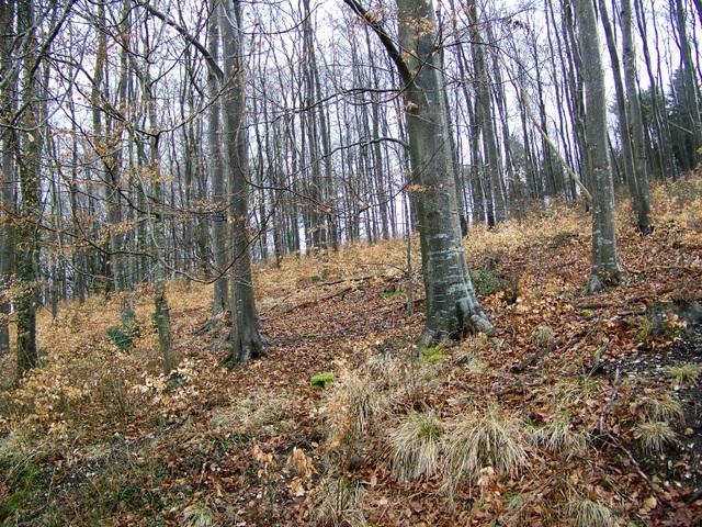 Stonedown Wood