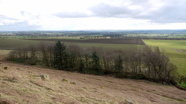 Plantation south of Moralees Crag, Ingoe