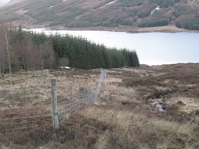 Forest edge above Loch Loyne
