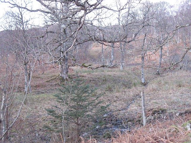 Oak woods, Achadh-Luachrach