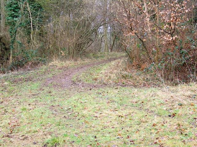 Path, Stonedown Wood