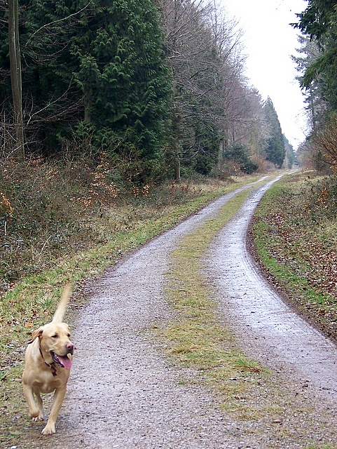 Track, Stonedown Wood