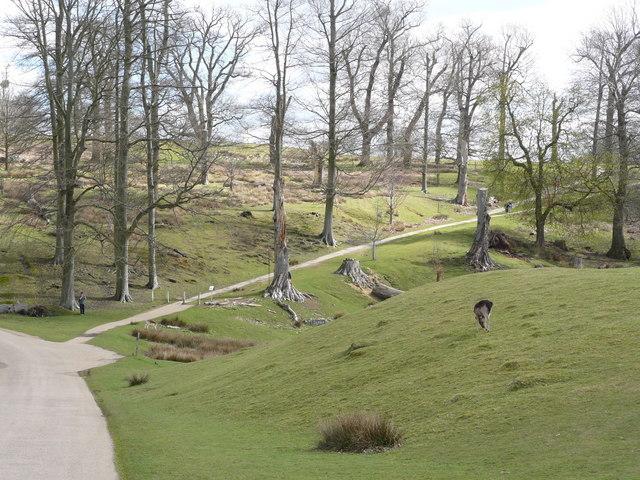 Parkland, Knole Park, Sevenoaks