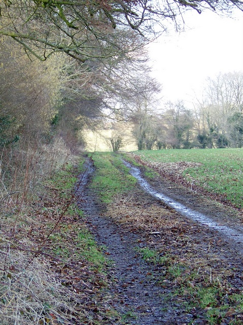 Footpath to Chettle Head Copse