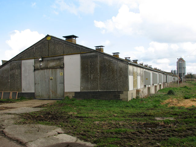 Poultry shed at East Farm