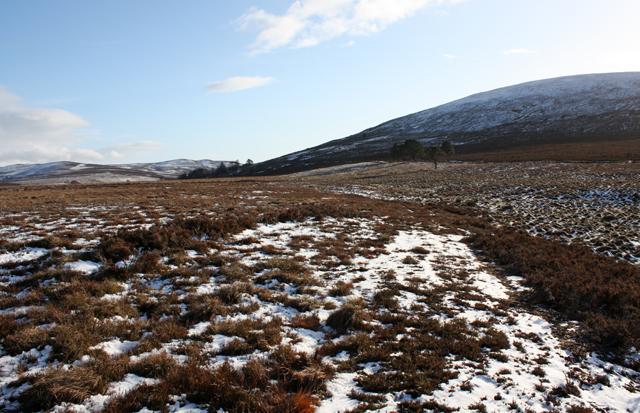 Moorland near Lochenoun