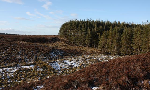Edge of Bogeney Plantation