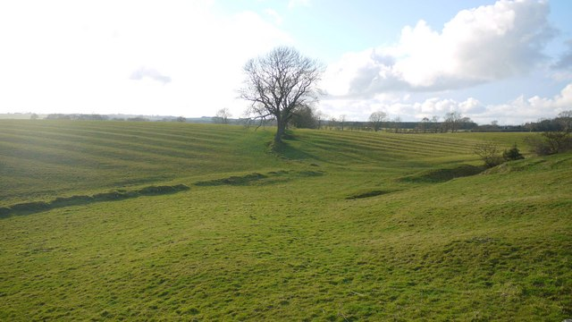 Old boundaries and ridge and furrow in pasture west of Black Heddon