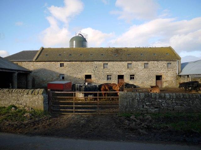 Farmyard at Black Heddon