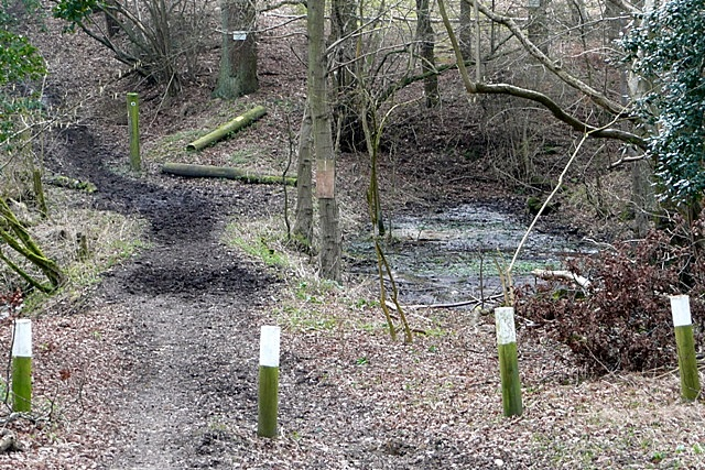 Hollow on the bridleway