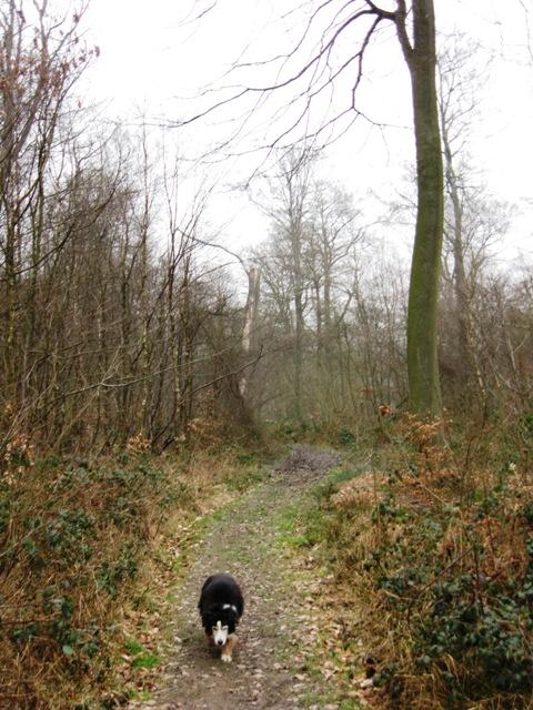 The Footpath through High Scrubs Wood