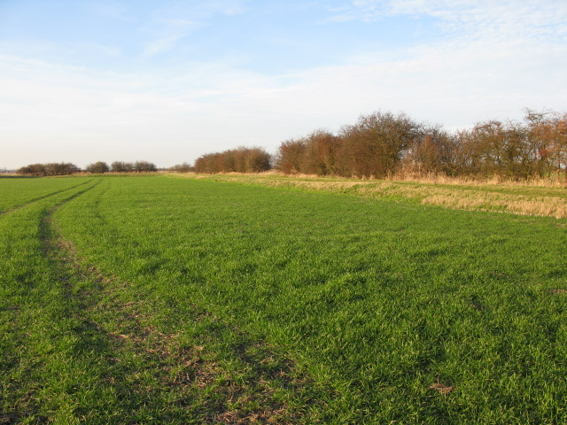 Field boundary on Chislet Marshes