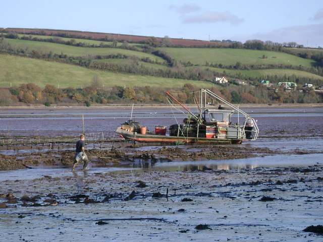Oyster beds and boat, Teign estuary