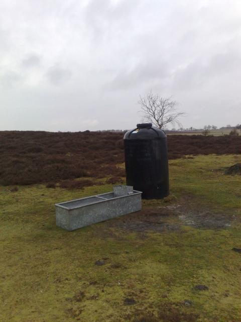 Roydon Common cattle trough