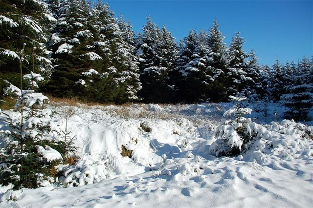 Snow In Glenalla Forest