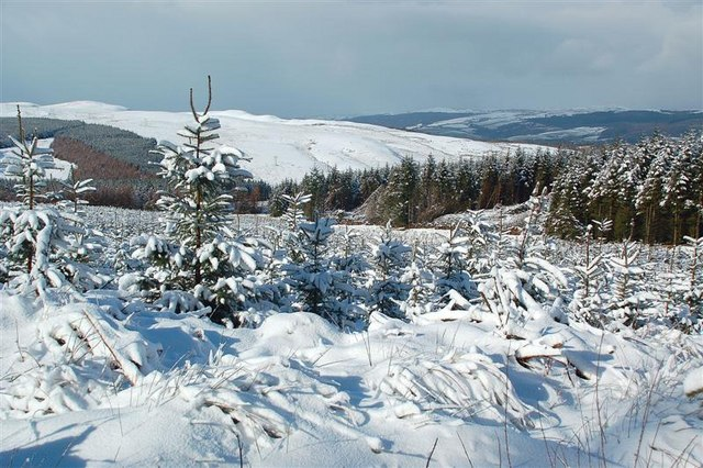 Glenalla Forest View