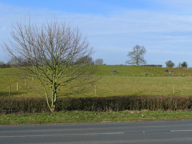 Paddocks by the B4215