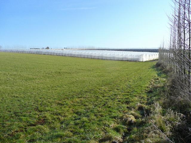 Pasture and polythene 2