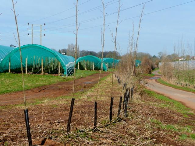 Protected cropping by Hopyard Lane 1