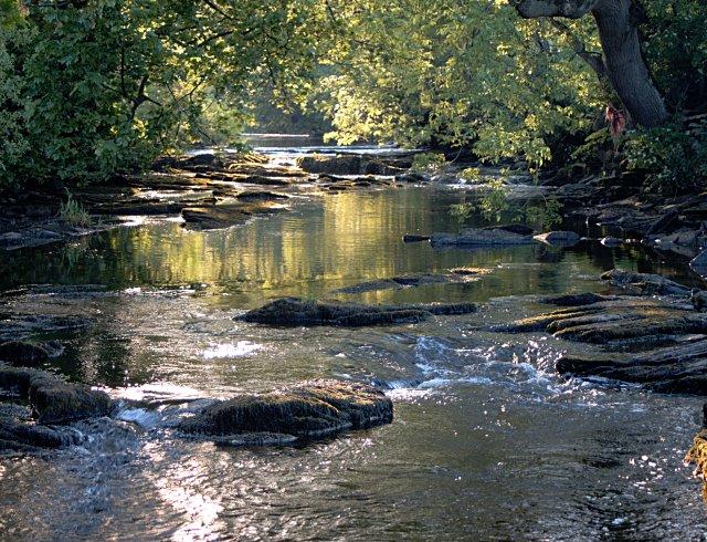 River Greta in summer