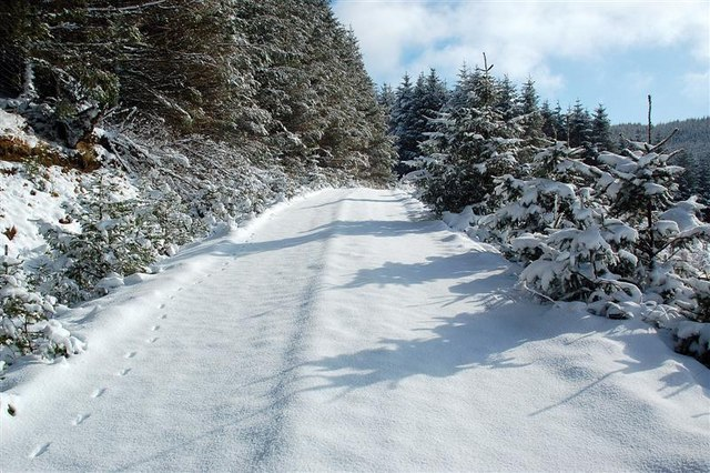 Snowy Track In Glenalla Forest