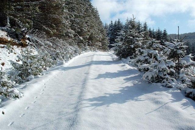 Snowy Track In Glenalla Forest