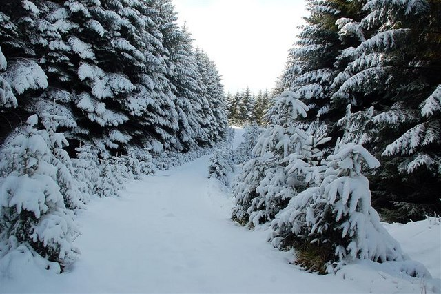 Deep Snow In Glenalla Forest