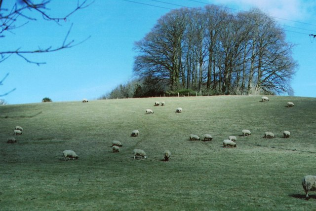 Membury Hillfort approach � �sheep may safely graze�