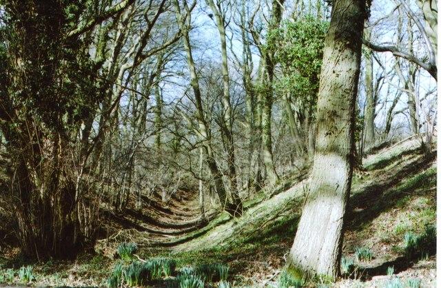 Membury Hillfort – the ramparts