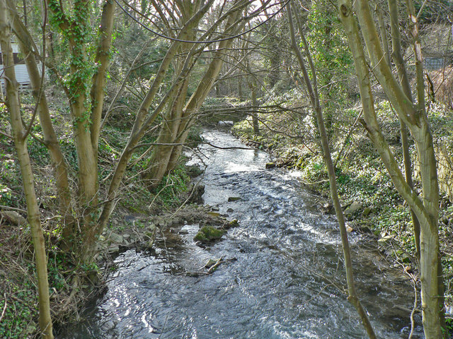 The Hoddnant flowing through woodland.