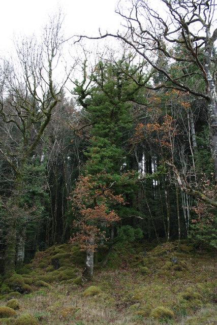 Woodland by Loch Sunart