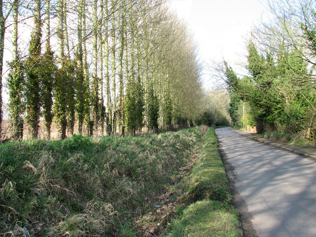 View north along West Lane