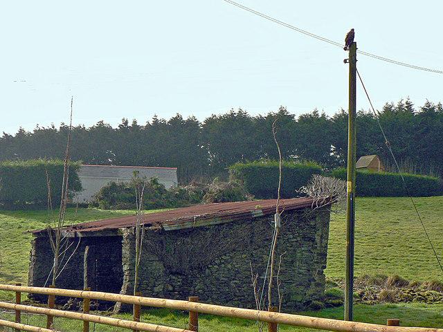 Buzzard keeping watch, Kernock near Pillaton.