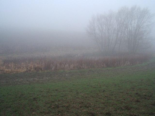 Pond on a misty morning