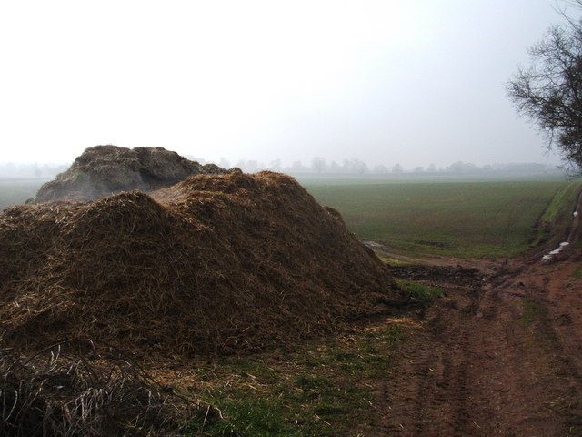 Steaming; a fine muck pile at  White Lodge Farm