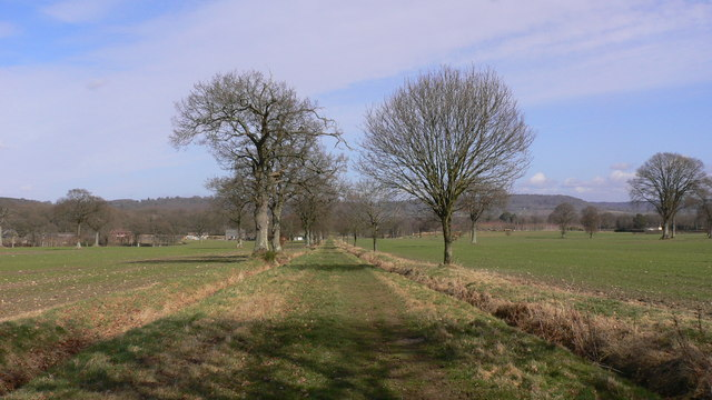 Long, straight byway going north east from Trotton Marsh