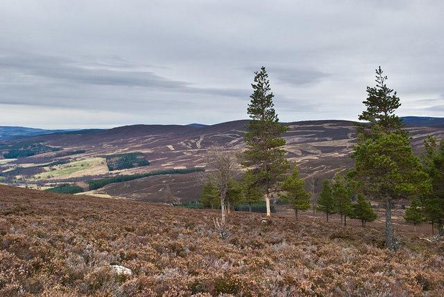 Hillside above Pollagach Burn (2)