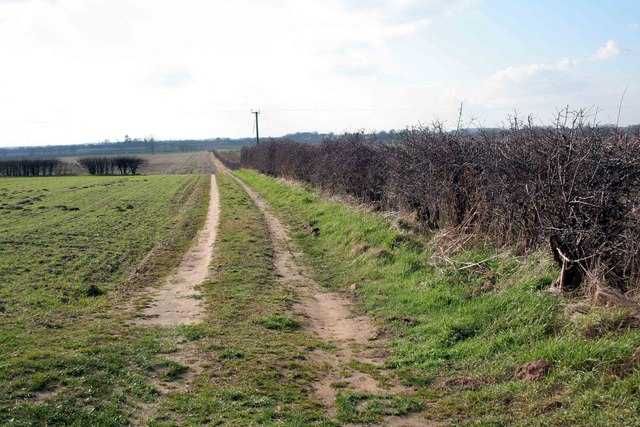 Farm track by the hedge