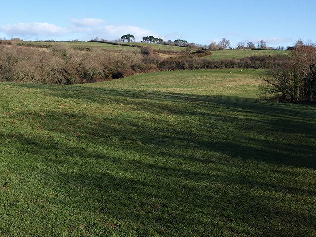 Field on Churchtown Farm Community Nature Reserve
